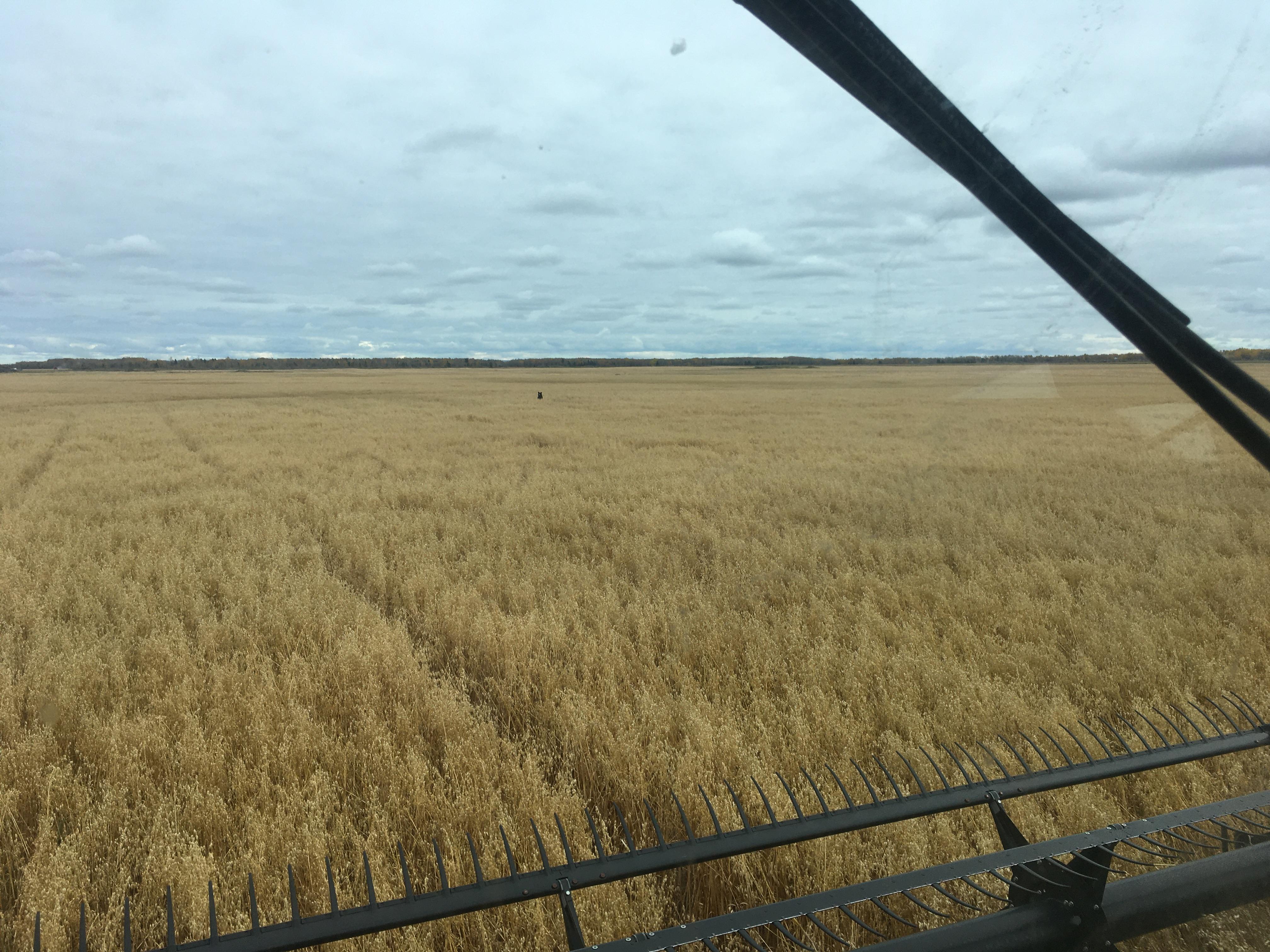 Eastern Saskatchewan, Saskatchewan, Saskatchewan    - Photo 1 - RP9619627030