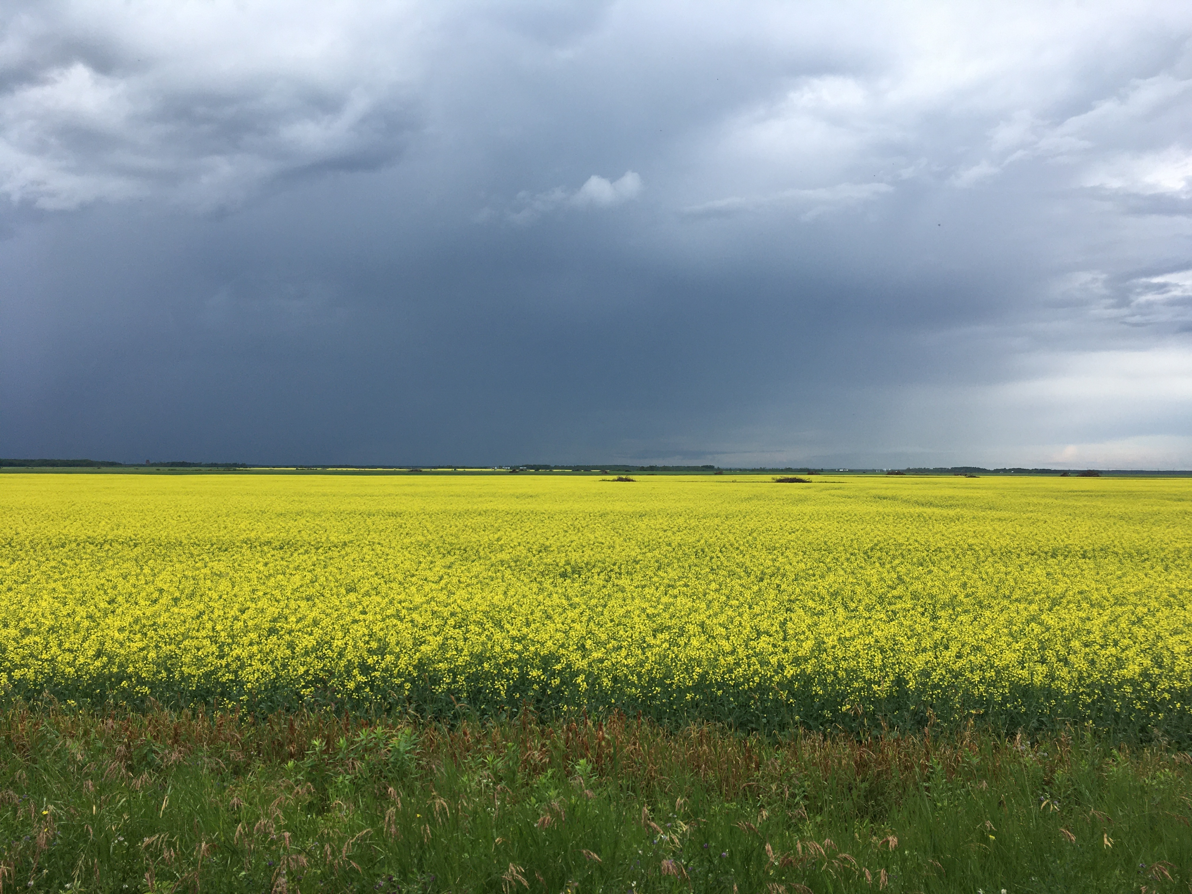 Eastern Saskatchewan, Saskatchewan, Saskatchewan    - Photo 4 - RP9619627030