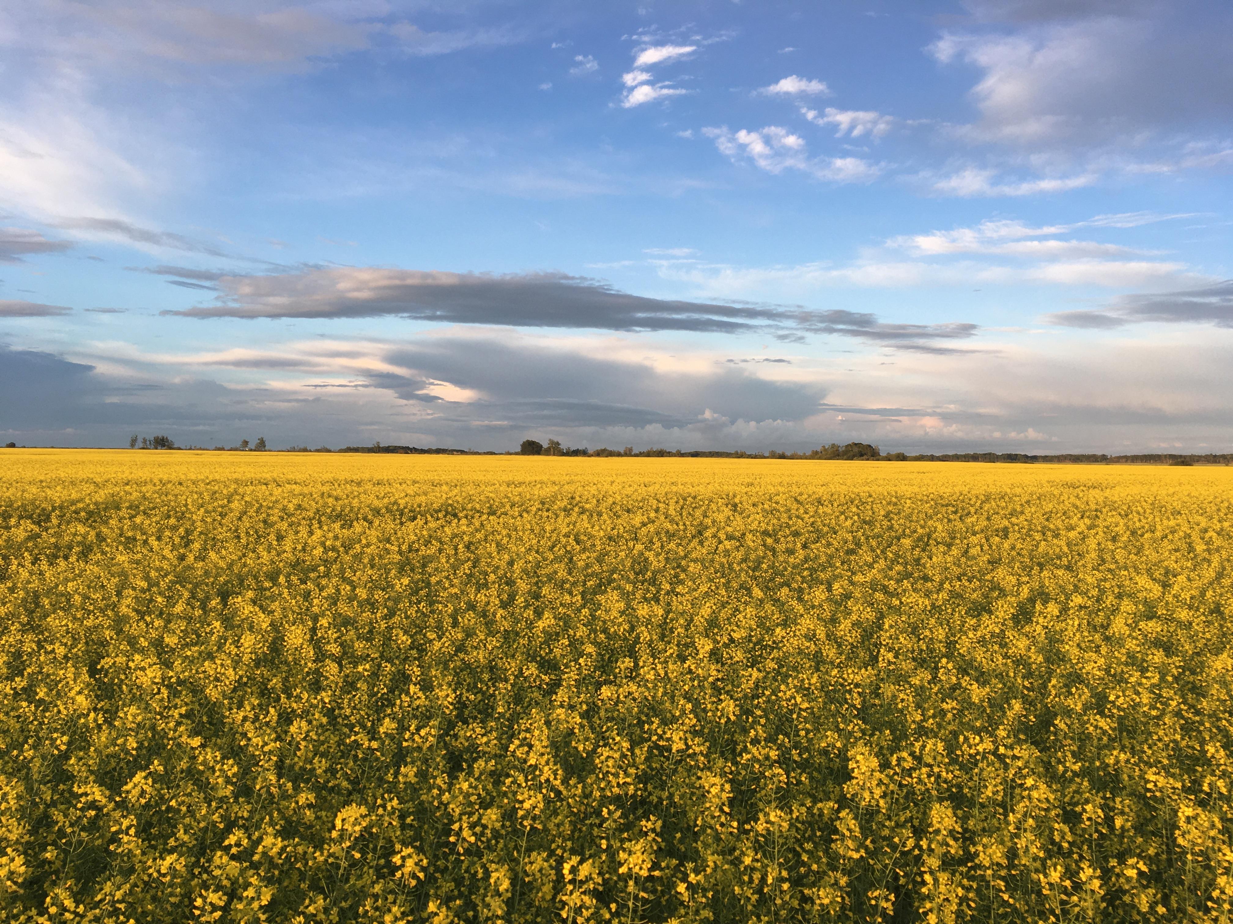 Eastern Saskatchewan, Saskatchewan, Saskatchewan    - Photo 5 - RP9619627030